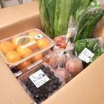 野菜のいただきものほど嬉しいものはナイ