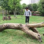 いつもと違う公園と幸運のクローバー